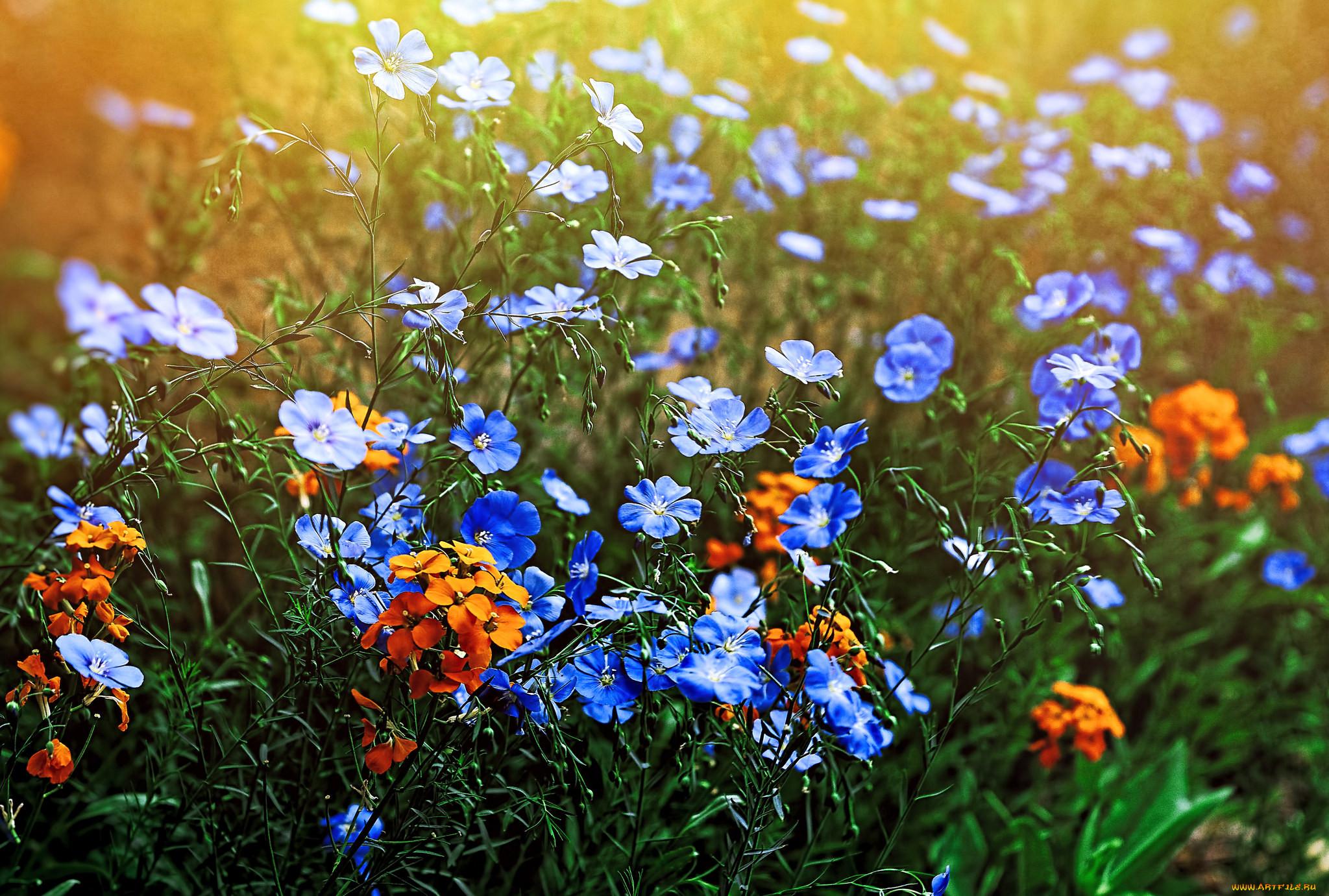 торжества картинка яркие полевые цветы кольцо
